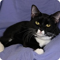 Adopt A Pet :: Zorro - Duncan, BC