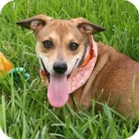Terrier (Unknown Type, Small) Mix Dog for adoption in San Leon, Texas - Joy