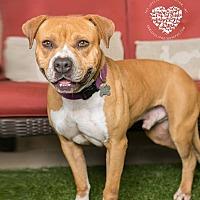 Adopt A Pet :: Jackson - Inglewood, CA