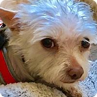 Adopt A Pet :: Noah-ADOPTION PENDING - Boulder, CO