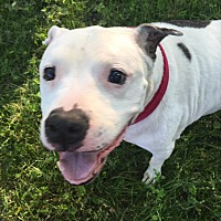 Adopt A Pet :: Suki - Dayton, OH