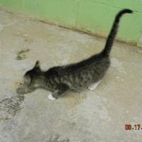 Adopt A Pet :: Mac - Monticello, GA