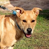 Adopt A Pet :: Jonesy - Enterprise, AL