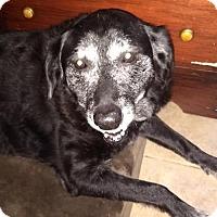 Adopt A Pet :: Polly - Carmichael, CA