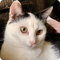 Adopt A Pet :: Alina - Valley Stream, NY