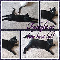 Adopt A Pet :: Twilight - Cedar Springs, MI