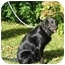 Photo 1 - Labradoodle Mix Dog for adoption in Osseo, Minnesota - Belle