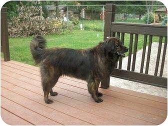 Chow Chow/Labrador Retriever Mix Dog for adoption in Bay City, Michigan - Ursula~~adopted 1/2012~~