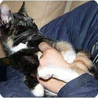 Adopt A Pet :: Callie - Davis, CA