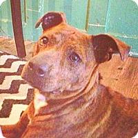 Adopt A Pet :: Ella - Kingwood, TX
