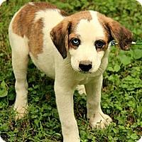 Adopt A Pet :: Dalton - Staunton, VA