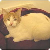 Adopt A Pet :: Kowie - Mesa, AZ
