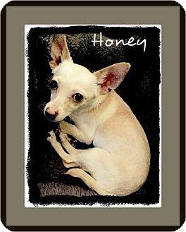 Chihuahua Dog for adoption in Houston, Texas - Honey