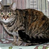 Adopt A Pet :: Cheyanne - New Kensington, PA