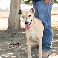 Adopt A Pet :: Girly - Visalia, CA