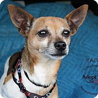 Adopt A Pet :: Taco - Shawnee Mission, KS
