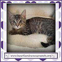 Adopt A Pet :: Cadbury - Southport, FL