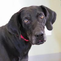 Adopt A Pet :: Trish - Lihue, HI