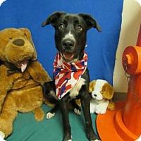 Adopt A Pet :: Winston - Trenton, MO