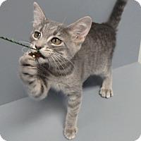 Adopt A Pet :: Penelope - Seguin, TX