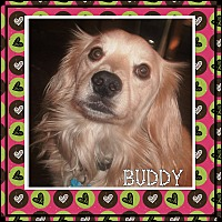 Adopt A Pet :: Buddy - Santa Barbara, CA