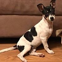 Adopt A Pet :: Lucy - San Francisco, CA