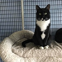 Adopt A Pet :: Ollie - New Milford, CT