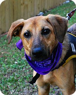 Shepherd (Unknown Type) Mix Dog for adoption in Baton Rouge, Louisiana - Sandy