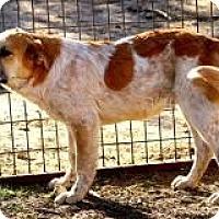 Adopt A Pet :: John-John - New Boston, NH