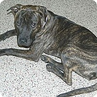 Adopt A Pet :: Madison - Chicago, IL