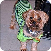 Adopt A Pet :: Colby - Homestead, FL