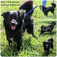 Adopt A Pet :: Bear - Evansville, IN