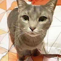 Adopt A Pet :: Ellie - Arlington/Ft Worth, TX