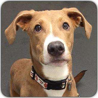 Hound (Unknown Type) Mix Dog for adoption in Ithaca, New York - Bingo