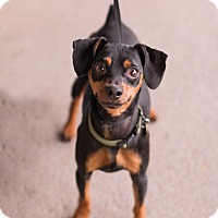 Adopt A Pet :: Chewy - Syracuse, NY