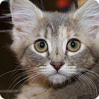 Adopt A Pet :: Pallas - Irvine, CA
