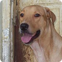 Adopt A Pet :: Spencer - Portland, ME