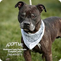 Adopt A Pet :: Ruger - RESCUED! - Zanesville, OH