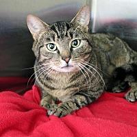 Adopt A Pet :: Norman #3 - Paris, ME