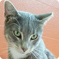 Adopt A Pet :: Tom Mock - Sarasota, FL