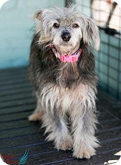 Terrier (Unknown Type, Medium) Mix Dog for adoption in Roanoke, Virginia - Sarah
