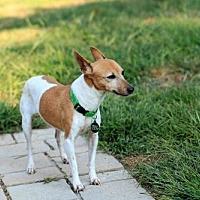 Adopt A Pet :: BeBe - Morganville, NJ