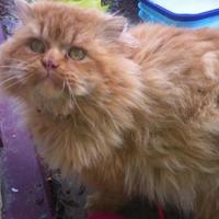 Adopt A Pet :: Remi - Saskatoon, SK