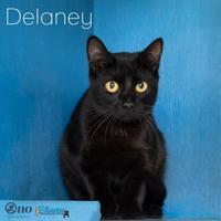 Adopt A Pet :: Delaney - Fairhope, AL
