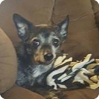 Adopt A Pet :: Chico - Albemarle, NC