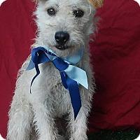 Adopt A Pet :: MOMO - pasadena, CA