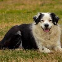 Adopt A Pet :: Spring - Shelby, NC