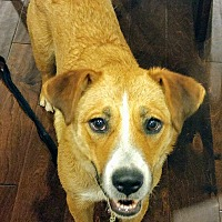 Adopt A Pet :: Happy - Pittsboro, NC
