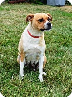 Terrier (Unknown Type, Small) Mix Dog for adoption in Indianola, Iowa - Wendy
