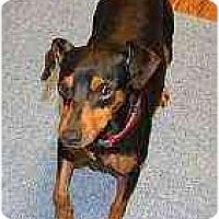 Adopt A Pet :: Prince - Summerville, SC